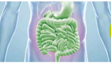 Črevo, središče našega zdravja
